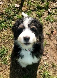 Opa 1 puppy
