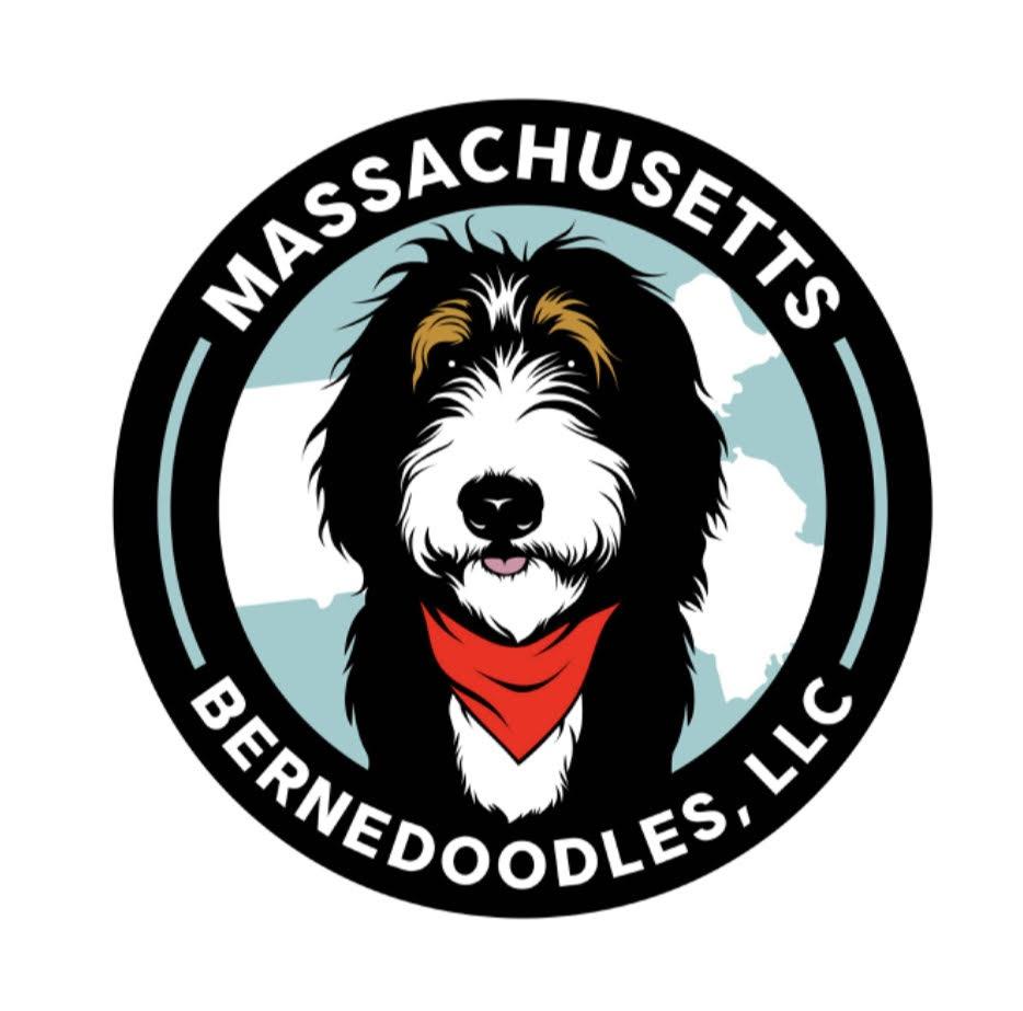 Massachusetts Bernedoodles LLC